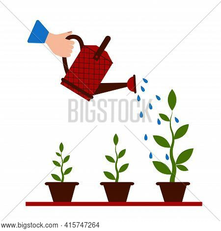 Watering Seedlings With A Garden Watering Can. Young Garden Shoots. Water Is Pouring Out Of The Wate