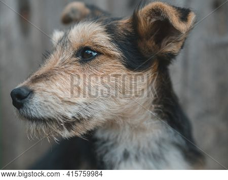 Stray dog outdoor. Cute dog puppy.