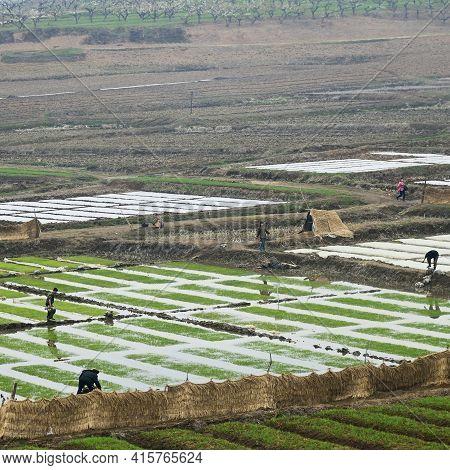 North Korea, Pyongyang Region - April 30, 2019: Countryside Landscape, Peasants Cultivate Rice Field