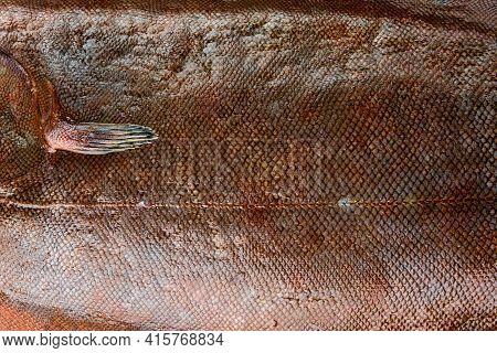 Raw Sole Fish. Fresh Fish Scales Close-up.