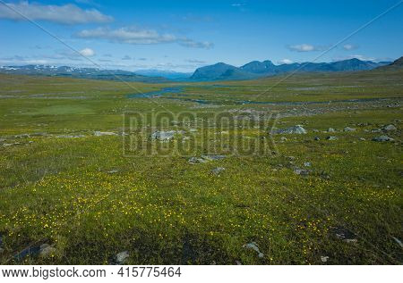 Arctic nature of Scandinavia in warm summer sunny day with blue sky. View from Nordkalottruta or Arctic hiking Trail in northern Sweden. Green meadow with many small yellow flowers