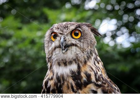 Wonderful Portrait Of A Eurasian Eagle-owl With A Serious Expression With Glowing Eyes Sitting On A