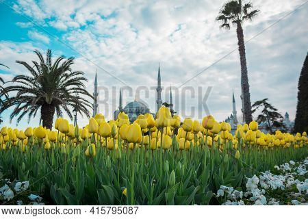 Yellow Tulips With Blue Mosque Background. Mosque's Of Istanbul. Tulips And Mosque Background. Sprin