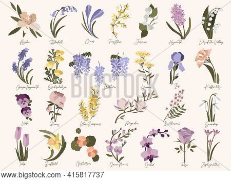 Set Of Spring Modern Flowers. Azalea,bluebell,crocus,daffodil,forsythia,grape Hyacinth,iris,jasmine,