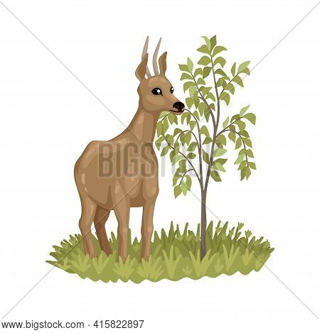 Roe Deer Eating Bush Leaves, Animal In Nature, Character Illustration Of Zoology And Biology. Isolat
