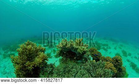 Soft And Hard Corals. Underwater Fish Garden Reef. Reef Coral Scene. Philippines.