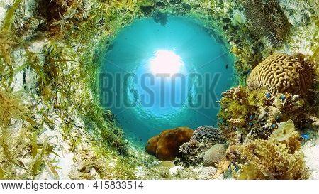 Reef Marine Underwater Scene. Tropical Underwater Sea Fish. Philippines.
