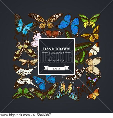 Square Design On Dark Background With Great Orange-tip, Emerald Swallowtail, Jungle Queens, Plain Ti