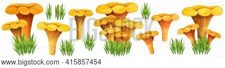 Huge Chanterelle Watercolor Set With Different Bunches, Front View. Golden Girolles In The Grass. Ea