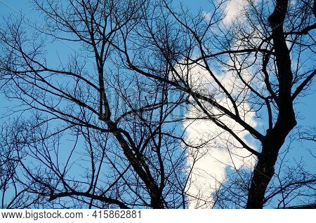 Silhouette Of Bare Tree Branches Against Blue Sky With White Pollution Smoke In The Background