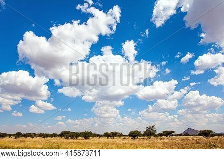 Lush clouds float in the blue sky. Travel to Africa. The magical desert in Namibia. Hot day. Flat savanna covered with dry yellow grass and rare desert acacias