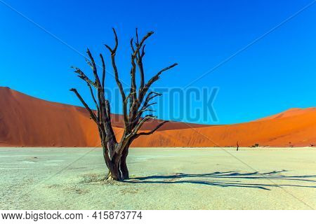 The bottom of the dried lake Sussussflay. Clay plateau in the part of the Namib desert. Sunny morning. Grand trip to Namib Naukluft desert. The concept of exotic, extreme and photo tourism