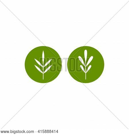 Rosemary And Thyme. Set Of White Line Twigs, Shoots, Sprigs In Green Circles Isolated On White. Agri