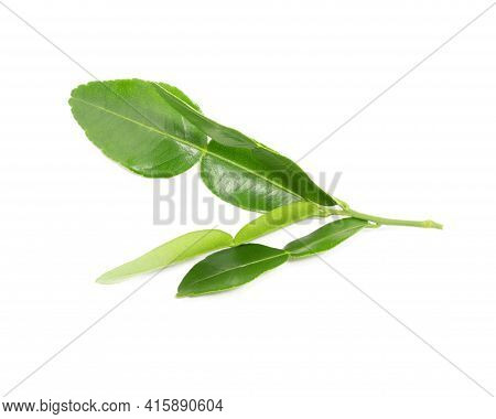 Leaf Of Bergamot, Kaffir Lime Fresh Leaf Isolated On White Background.