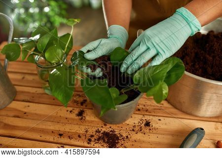 Close-up Shot Of A Girl Who Planting A Plant. Home Garden Concept. Female Hands In Gloves Caring For
