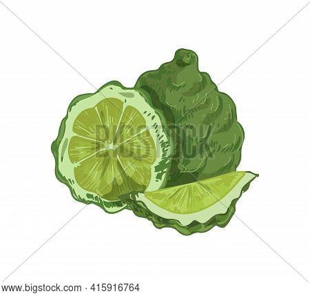Whole Fruit, Slice, Segment And Half Of Tropical Bergamot. Composition Of Fragrant Green Citrus. Rea