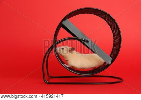 Cute Little Hamster In Spinning Wheel On Red Background