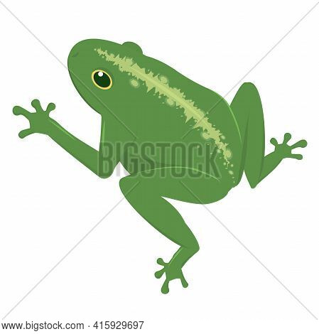 Vector Illustration Of A Green Frog Isolated On A White Background