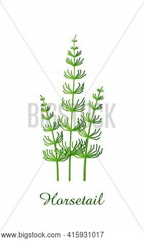 Horsetail Plant, Green Grasses Herbs And Plants Collection, Realistic Vector Illustration