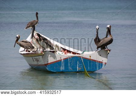Group Of Pelicans Standing On A Fisher Boat In The Bay Of Pampatar. Isla Margarita Is The Largest Is