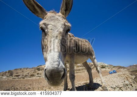 Funny Donkey Head And Blue Sky In Greece