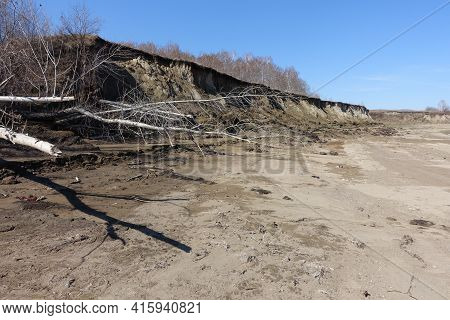 Spring Landslide Of A Sandy Ravine. Fallen Trees. Spring Landscape.