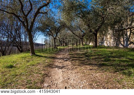 Footpath Under An Olive Grove On The Coast Of The Lake Garda (lago Di Garda) With Blue Sky And Cloud