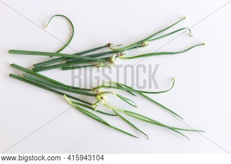 Tree Onion, Topsetting Onions, Walking Onions, Or Egyptian Onions On A White Background. Allium Prol