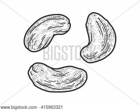 Cashew Nut Set Sketch Engraving Vector Illustration. T-shirt Apparel Print Design. Scratch Board Imi