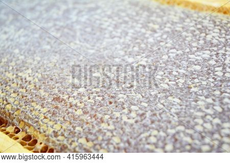 Sealed Honey Texture, Comb Sealed Honey Frame Background. A Frame Full Of Sealed Honey.