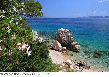 Oleander Flowers In Croatia. Dalmatia Adriatic Coast. Croatia Coast Landscape. Beach Landscape Of Mi