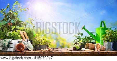 Gardening tools and seedlings on wooden table outdoors. Spring in the garden