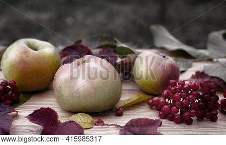 In The Garden, Ripe Apples, Red Viburnum Berries And Autumn Leaves Are On The Table. Front View, Clo