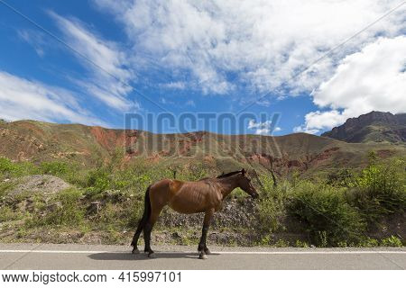 Side View Of A Chestnut Horse Standing On Road 40 (ruta 40) In Argentina With Mountain In The Backgr