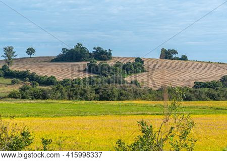 Rural Landscape In Farm Area With Soybean Cultivation And Harvest