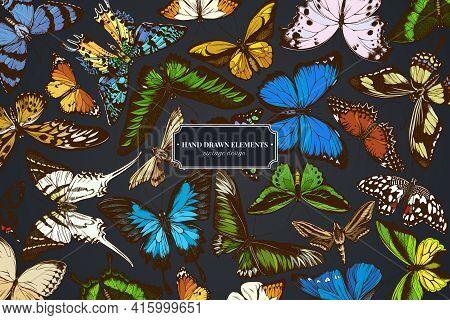 Design On Dark Background With Great Orange-tip, Emerald Swallowtail, Jungle Queens, Plain Tiger, Ra