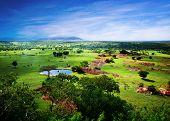 Savanna in bloom, in Tanzania, Africa panorama. Serengeti poster