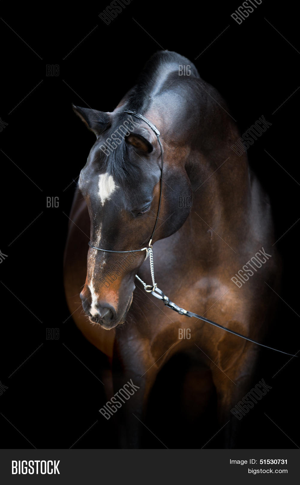 Horse Head Isolated On Image Photo Free Trial Bigstock