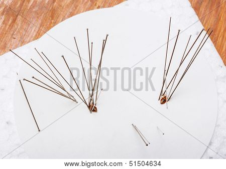 Use of insect entomology pins to set bedbug or cimex on white paper poster