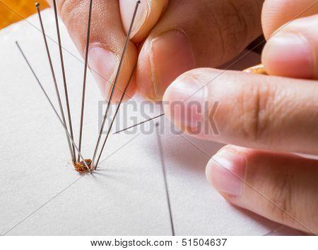 Insect Entomology Pins