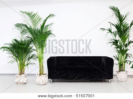 Black sofa in modern minimalism interior with green plants