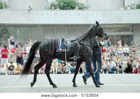 Riderless Horse In Washington Dc Memorial Day Parade