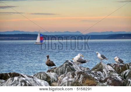 Seagulls And Sailboat