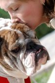 Woman gives a big kiss full of love to her Bulldog in the park poster