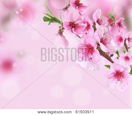 Beautiful pink peach blossom on bright background