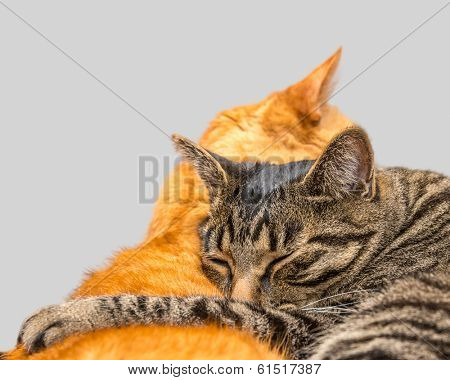 Two cats sleeping together