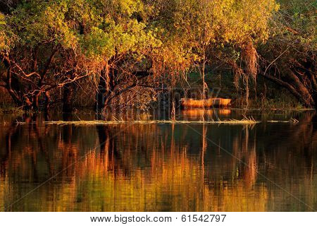Trees and wooden boat reflected in water at sunset, Zambezi river, Namibia