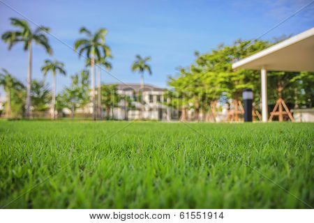 grass lawn with Modern Dream House background