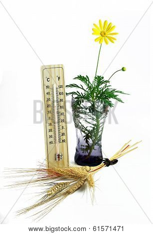 Thermometer Yard, Ears Of Wheat And Daisy
