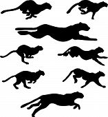 Set of different wildcats running silhouettes for design use poster